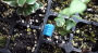 iot_rnt_sensors_modules_1_dht11_greenhouse.png
